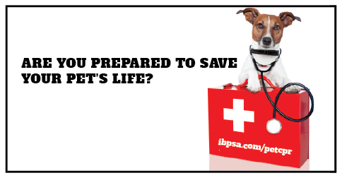 are you prepared to save a pet's life? pet cpr and first aid class ...