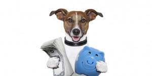 pet care services industry billion dollar